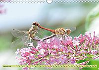 Wunder der Evolution Libellen (Wandkalender 2019 DIN A4 quer) - Produktdetailbild 1