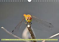 Wunder der Evolution Libellen (Wandkalender 2019 DIN A4 quer) - Produktdetailbild 4