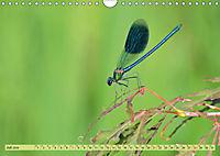 Wunder der Evolution Libellen (Wandkalender 2019 DIN A4 quer) - Produktdetailbild 7