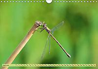 Wunder der Evolution Libellen (Wandkalender 2019 DIN A4 quer) - Produktdetailbild 6