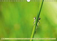 Wunder der Evolution Libellen (Wandkalender 2019 DIN A4 quer) - Produktdetailbild 5