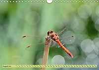 Wunder der Evolution Libellen (Wandkalender 2019 DIN A4 quer) - Produktdetailbild 8