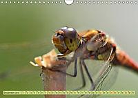 Wunder der Evolution Libellen (Wandkalender 2019 DIN A4 quer) - Produktdetailbild 12