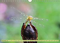 Wunder der Evolution Libellen (Wandkalender 2019 DIN A4 quer) - Produktdetailbild 11