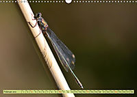 Wunder der Evolution Libellen (Wandkalender 2019 DIN A3 quer) - Produktdetailbild 2