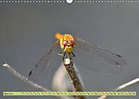 Wunder der Evolution Libellen (Wandkalender 2019 DIN A3 quer) - Produktdetailbild 4