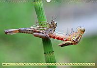 Wunder der Evolution Libellen (Wandkalender 2019 DIN A3 quer) - Produktdetailbild 3