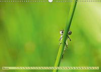 Wunder der Evolution Libellen (Wandkalender 2019 DIN A3 quer) - Produktdetailbild 5