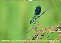 Wunder der Evolution Libellen (Wandkalender 2019 DIN A3 quer) - Produktdetailbild 7