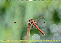 Wunder der Evolution Libellen (Wandkalender 2019 DIN A3 quer) - Produktdetailbild 8