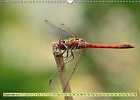 Wunder der Evolution Libellen (Wandkalender 2019 DIN A3 quer) - Produktdetailbild 9