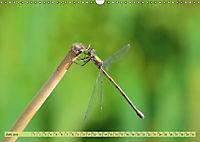 Wunder der Evolution Libellen (Wandkalender 2019 DIN A3 quer) - Produktdetailbild 6