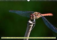 Wunder der Evolution Libellen (Wandkalender 2019 DIN A3 quer) - Produktdetailbild 10