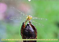 Wunder der Evolution Libellen (Wandkalender 2019 DIN A3 quer) - Produktdetailbild 11