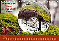 Wunderbare Waldkugeln (Tischkalender 2019 DIN A5 quer) - Produktdetailbild 7