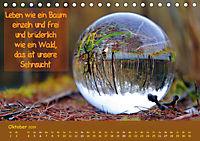 Wunderbare Waldkugeln (Tischkalender 2019 DIN A5 quer) - Produktdetailbild 10