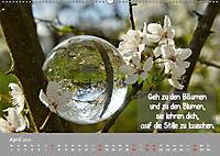 Wunderbare Waldkugeln (Wandkalender 2019 DIN A2 quer) - Produktdetailbild 4