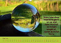 Wunderbare Waldkugeln (Wandkalender 2019 DIN A3 quer) - Produktdetailbild 6