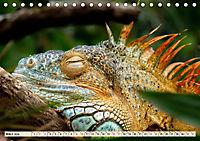 Wunderschöner Leguan (Tischkalender 2019 DIN A5 quer) - Produktdetailbild 3