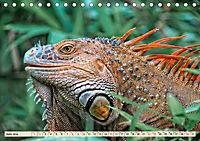 Wunderschöner Leguan (Tischkalender 2019 DIN A5 quer) - Produktdetailbild 6