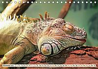 Wunderschöner Leguan (Tischkalender 2019 DIN A5 quer) - Produktdetailbild 12