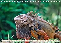 Wunderschöner Leguan (Tischkalender 2019 DIN A5 quer) - Produktdetailbild 1