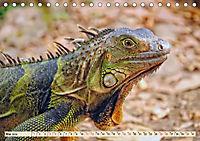 Wunderschöner Leguan (Tischkalender 2019 DIN A5 quer) - Produktdetailbild 5
