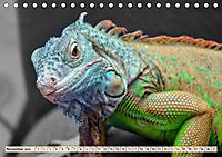 Wunderschöner Leguan (Tischkalender 2019 DIN A5 quer) - Produktdetailbild 11