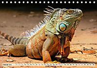 Wunderschöner Leguan (Tischkalender 2019 DIN A5 quer) - Produktdetailbild 2