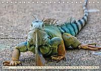 Wunderschöner Leguan (Tischkalender 2019 DIN A5 quer) - Produktdetailbild 7