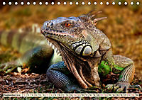 Wunderschöner Leguan (Tischkalender 2019 DIN A5 quer) - Produktdetailbild 9