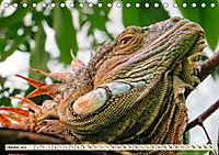 Wunderschöner Leguan (Tischkalender 2019 DIN A5 quer) - Produktdetailbild 10