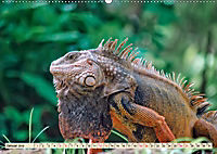 Wunderschöner Leguan (Wandkalender 2019 DIN A2 quer) - Produktdetailbild 1