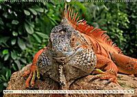 Wunderschöner Leguan (Wandkalender 2019 DIN A2 quer) - Produktdetailbild 4