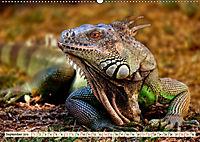 Wunderschöner Leguan (Wandkalender 2019 DIN A2 quer) - Produktdetailbild 9