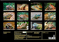 Wunderschöner Leguan (Wandkalender 2019 DIN A2 quer) - Produktdetailbild 13