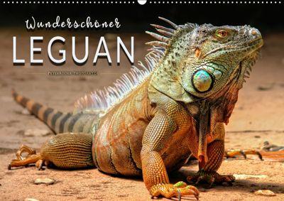 Wunderschöner Leguan (Wandkalender 2019 DIN A2 quer), Peter Roder