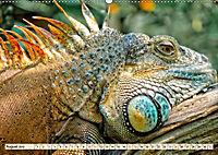 Wunderschöner Leguan (Wandkalender 2019 DIN A2 quer) - Produktdetailbild 8