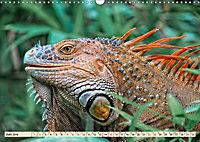 Wunderschöner Leguan (Wandkalender 2019 DIN A3 quer) - Produktdetailbild 6