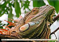 Wunderschöner Leguan (Wandkalender 2019 DIN A3 quer) - Produktdetailbild 10