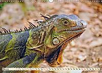 Wunderschöner Leguan (Wandkalender 2019 DIN A3 quer) - Produktdetailbild 5