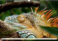 Wunderschöner Leguan (Wandkalender 2019 DIN A3 quer) - Produktdetailbild 3