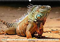 Wunderschöner Leguan (Wandkalender 2019 DIN A3 quer) - Produktdetailbild 2