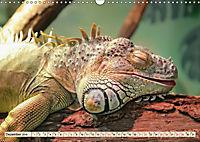 Wunderschöner Leguan (Wandkalender 2019 DIN A3 quer) - Produktdetailbild 12
