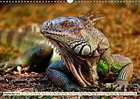 Wunderschöner Leguan (Wandkalender 2019 DIN A3 quer) - Produktdetailbild 9