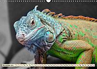 Wunderschöner Leguan (Wandkalender 2019 DIN A3 quer) - Produktdetailbild 11