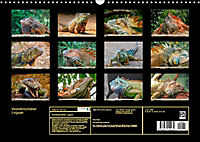Wunderschöner Leguan (Wandkalender 2019 DIN A3 quer) - Produktdetailbild 13