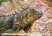 Wunderschöner Leguan (Wandkalender 2019 DIN A4 quer) - Produktdetailbild 5