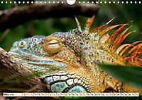 Wunderschöner Leguan (Wandkalender 2019 DIN A4 quer) - Produktdetailbild 3