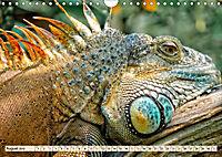 Wunderschöner Leguan (Wandkalender 2019 DIN A4 quer) - Produktdetailbild 8